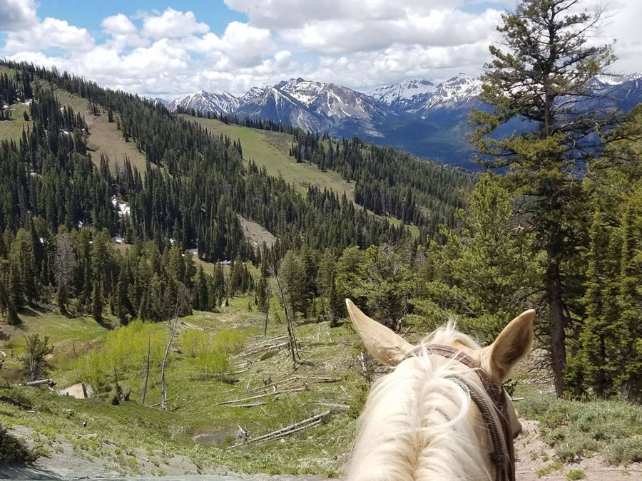 Nothing Beats the View From a Horse