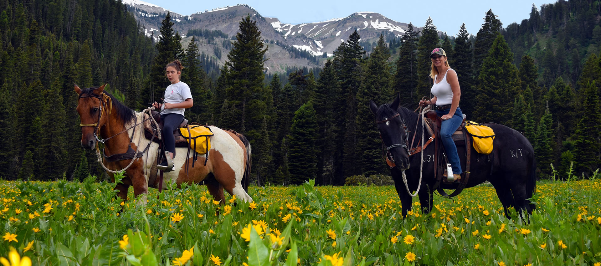 Jackson Hole Trail Rides, Horseback Rides, Wyoming, Camping